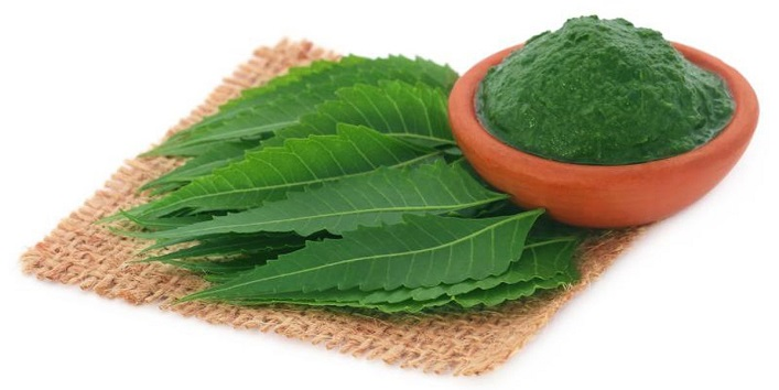 Neem-Leaves-for-Curing-Viral-Fever-and-Healing-Minor-Cuts-or-Burns