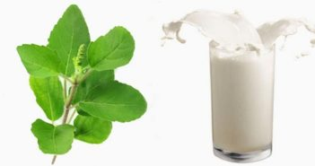 Amazing health benefits of drinking milk with basil leaves cover