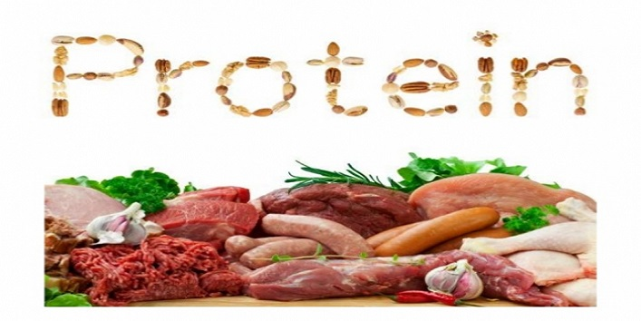 Proteins-are-best-for-you