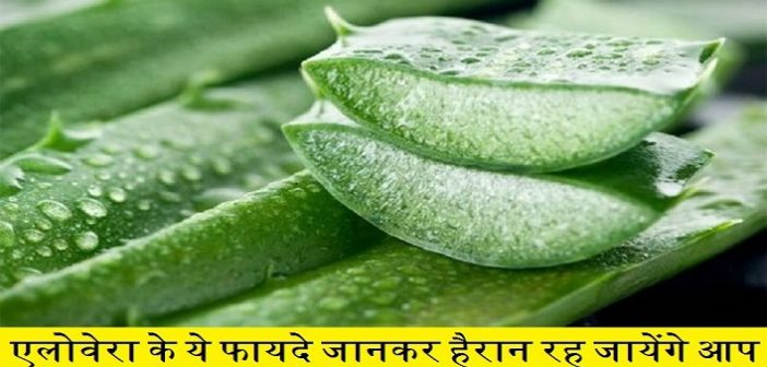 Know-the-benefits-of-aloevera-that-can-prevent-you-from-diseases-cover