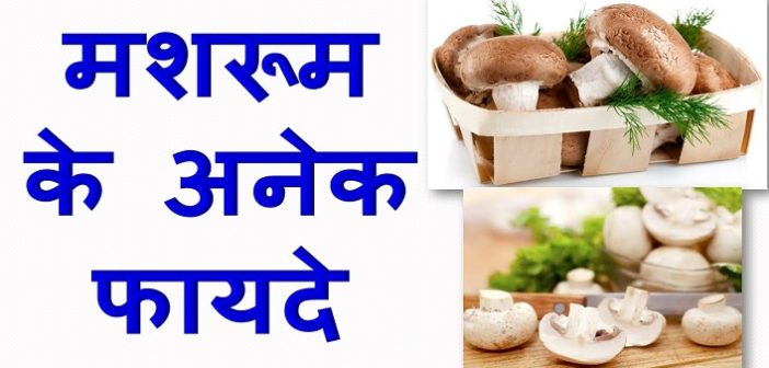 know-about-the-benefits-of-mushroom-in-your-diet-cover